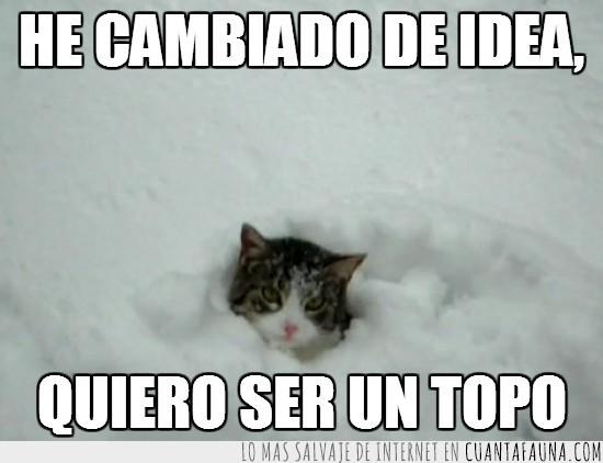 asomar,gato,nieve,topo