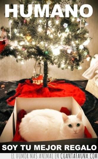 arbol,caja,carton,humano,luces,mejor regalo