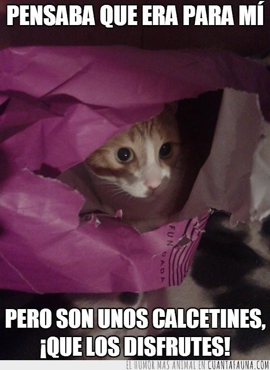 calcetines,gato,mono,pensaba que era para mi,regalo