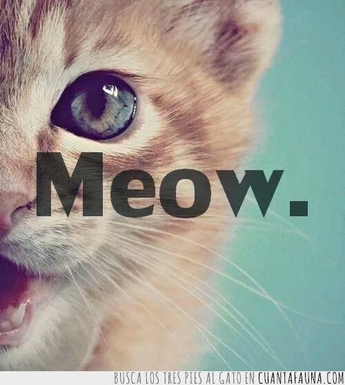 conquistar,cualquiera,Gato,meow,personas,ronroneo,sonido
