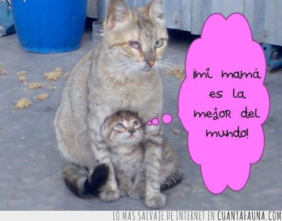 amor,animales,gatito,gatos,mama,proteccion,ternura