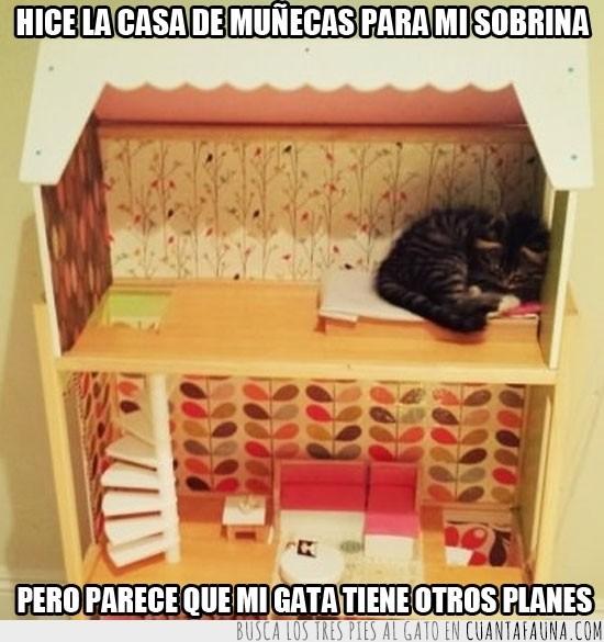 casa de muñecas,dentro,gata,gatita,ocupar,planes