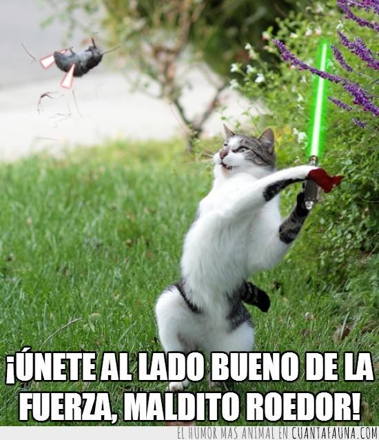 Batalla,Espadas,Gato,Lado De La Fuerza,Raton,Star Wars