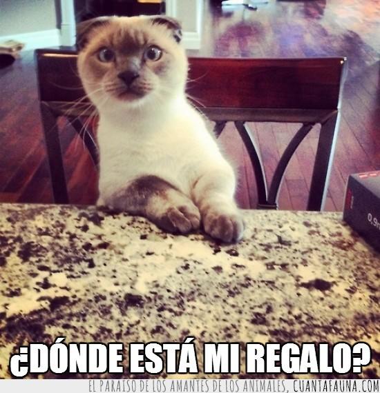 gato,mesa,molesto,pedir,regalo,sorpresa