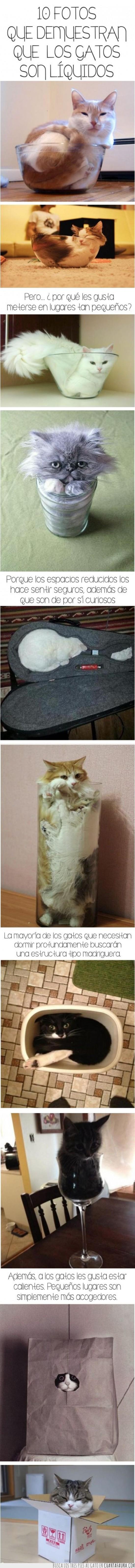 botellas,caja,curiosidades,esconderse,gatos,liquido,vasos