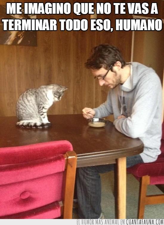 comida,gato,humano,mirar