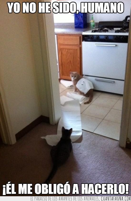 desastres,diversion,gatos,papel,servilletas