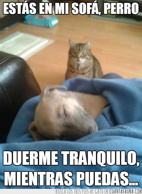 gato,mi sitio,mi sofa,pelea,perro,venganza