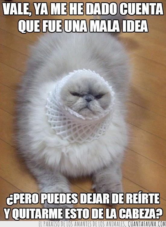 cabeza,espuma,gato,gracioso,metida,peludo,red
