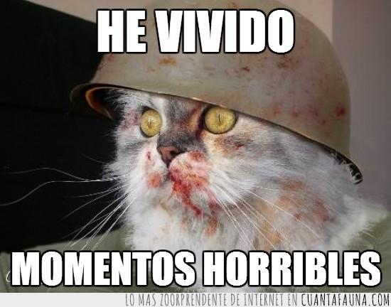 casco,gato,guerra,me he quedado sin atun,sangre