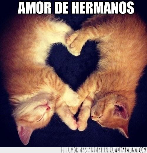corazón,figura,forma,gatos,juntos,ternura