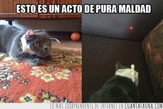 cansado,gato,laser,pobre gatito,punto rojo,pura maldad