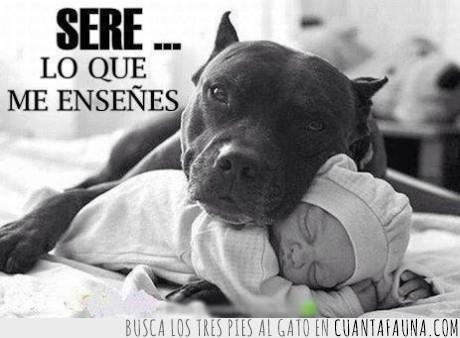 bebe,dormir,peligroso,perro,pitbull,proteger,raza,salvar