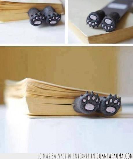 gato,Lectura,libro,saber,separador