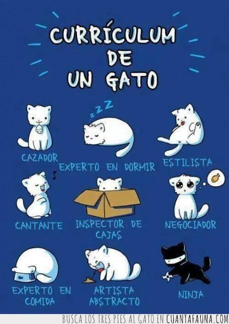 artista abstracto,cantante,cazador,curriculum de gato,estilista,experto en comida,experto en dormir,gato,inspector de cajas,negociador,ninja