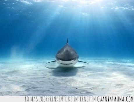 buceo,buzo,cara,escualo,mímica,señas,tiburón