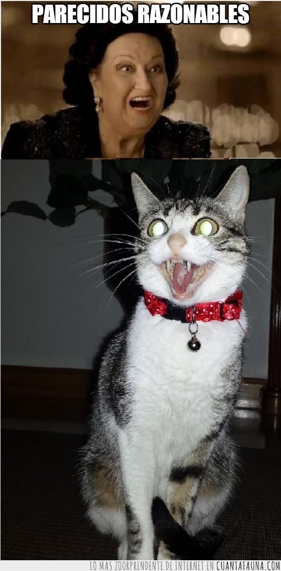 anuncio,cara,Gata,gato,lotería,Monserrat Caballé,navidad,rara