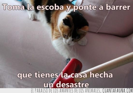 a limpiar,dueño,escoba,gato,limpieza,miau!