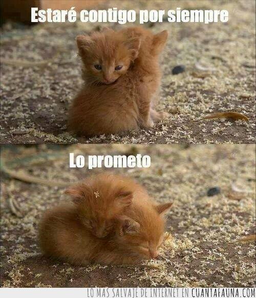 abrazo,forever,gatitos,Gatos,juntos,siempre