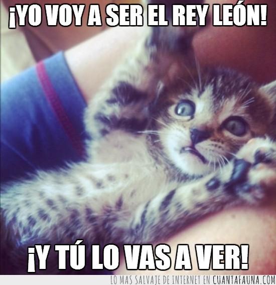 el rey león,Gato,ojazos,ojos,simba