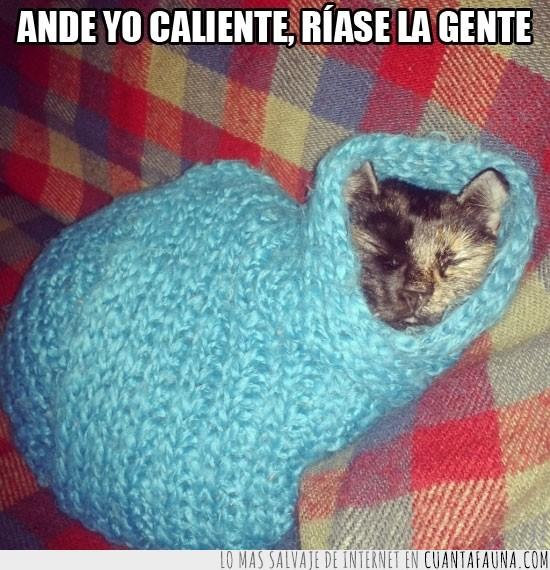 bufanda,envuelto,frio,gata,manta,tapado
