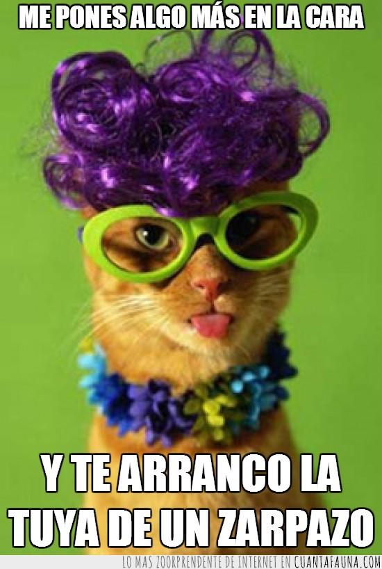 cara,collar,disfraz,gafas,gato,peluca,tia,zarpazo