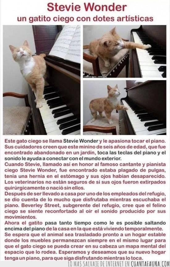 ciego,gato,inteligencia,maximo,nivel,pianista,stevie wonder