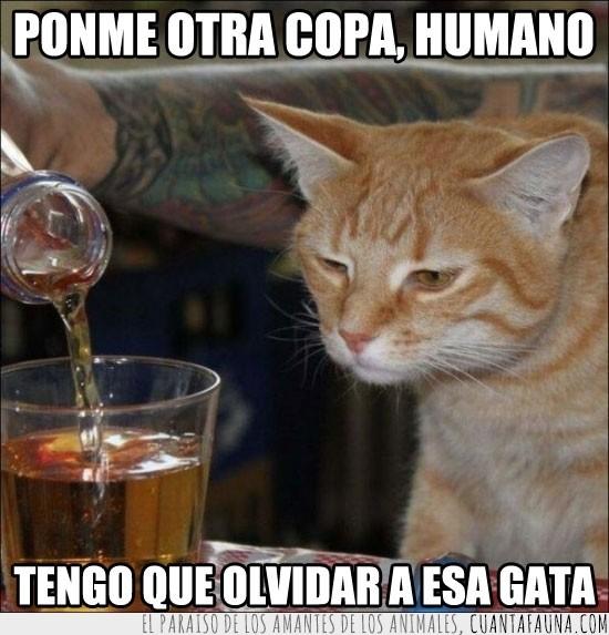 alcohol,amor,beber,copa,gata,olvidar,trago