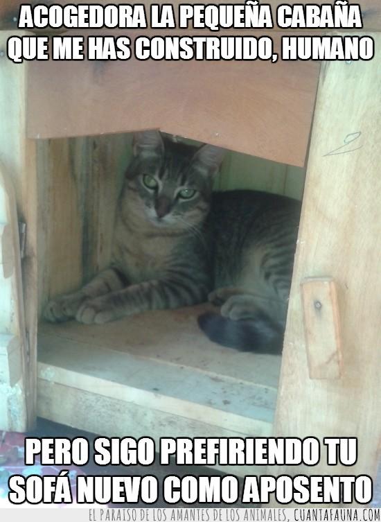 aposento,cabaña,dentro,gato,hogar,madera,sofa