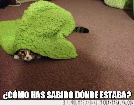 alfombra,donde estoy,escondido,gato,saber