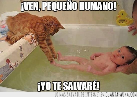 agua,baño,bebe,gato,pequeñin,rescatar,rescate,ternura