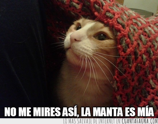 es,gato,manta,mia,posesividad