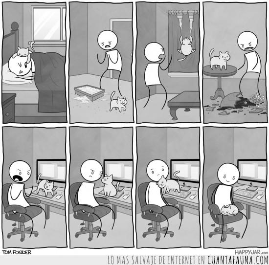 cat,comic,cortinas,gato,happyjar,ordenador,teclado