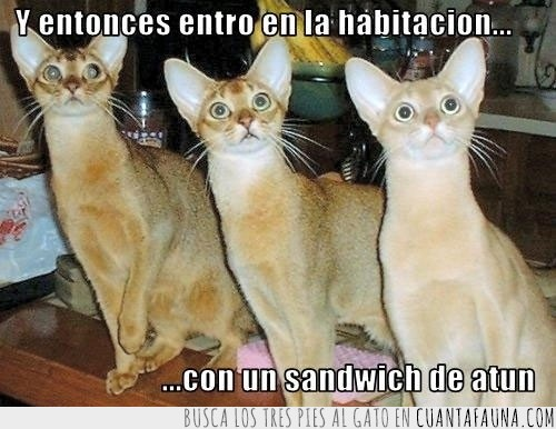 atún,entrar,espectación,sandwich,tensión