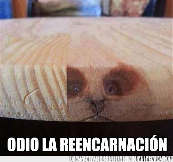 forma de gato,madera,mesa,odio,reencarnar