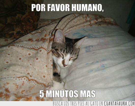 5 minutos más,almohada,cama,dormido,dormir,tapado
