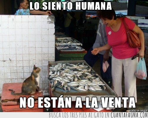 gato,humana,mercado,no a la venta,peces,pescado,vendedor