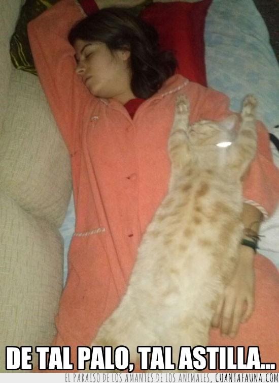 dormir,estiradas,gato,iguales,pijama,sofá,tumbadas