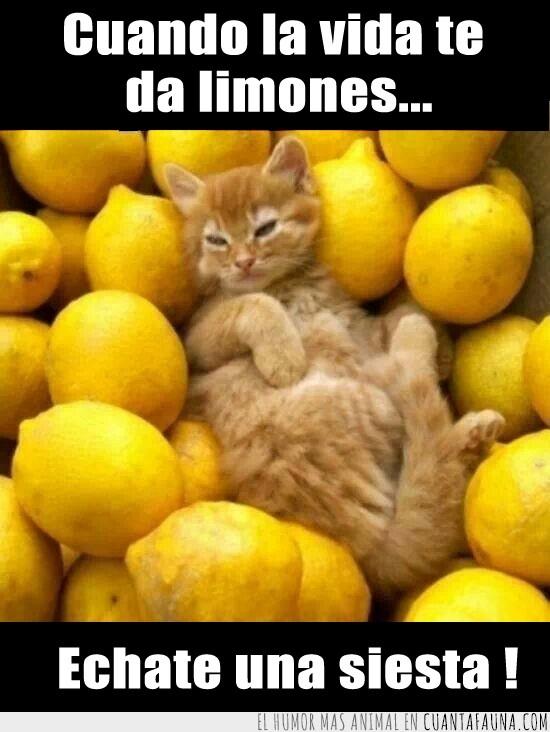 dormir,gato,siesta,solucion,te da limones,vida