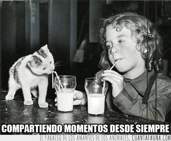 amigos,Gato,infancia,leche,mejores,momento,niña,pasar,tiempo,vaso