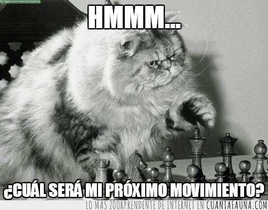 ajedrez,ganar,Gato,inteligencia,juego,movimiento,pensar