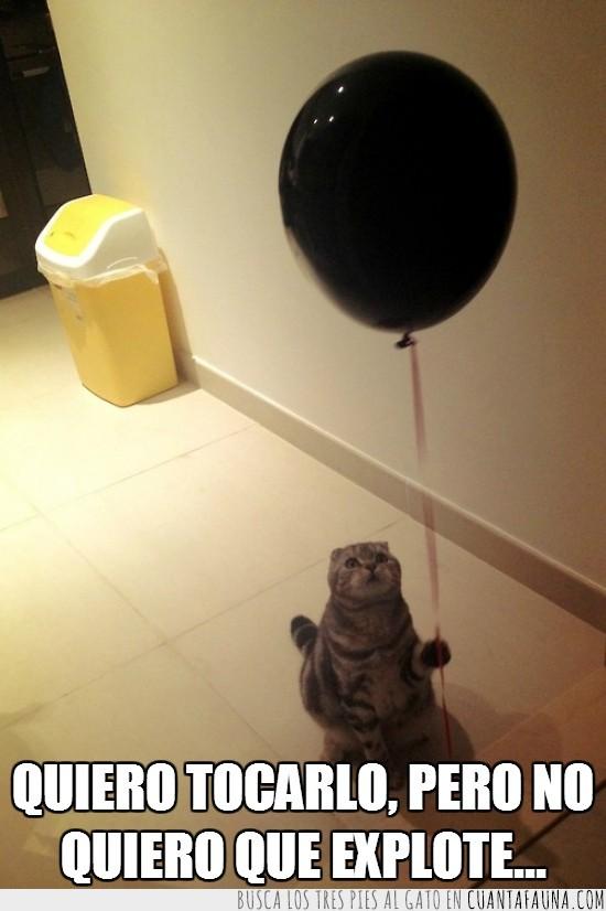 atado,cuerda,explotar,gato,globo,mirar,negro,ruido,susto