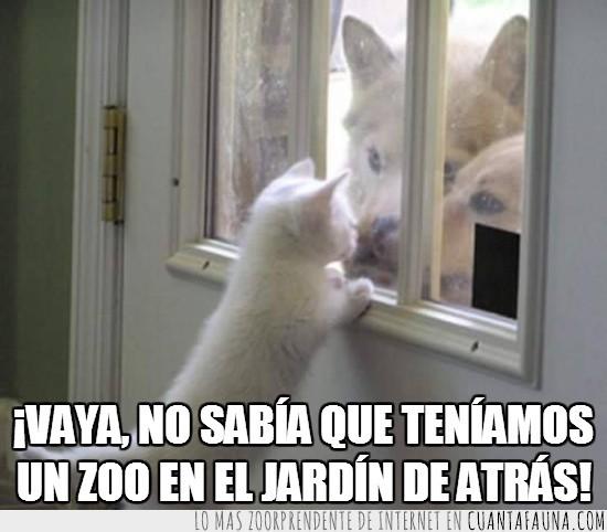 Gato,jardin de atras,puerta,ventana,zoo,zoologico