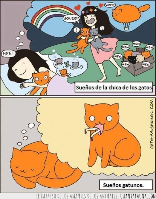 asesinar,chica de los gatos,diferencia,dueño,humano,loca de los gatos,sueños