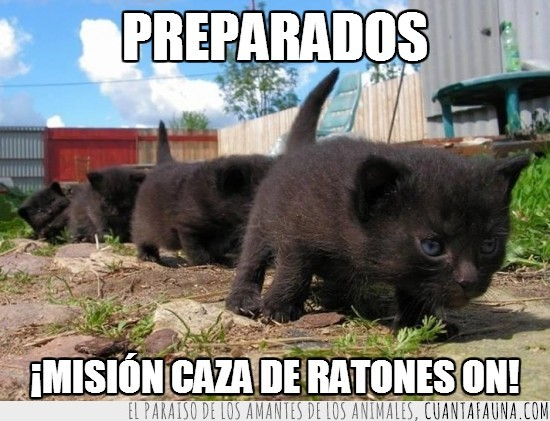 cachorros,cazar,fila,Gatos,india,misión,negros,pose,ratones