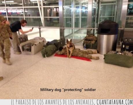 dormido,dormir,pastor aleman,perro,proteger,soldado