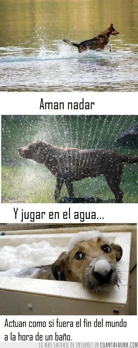 aspersor,bañar,logica,mar,mojar,mundo,perro,piscina