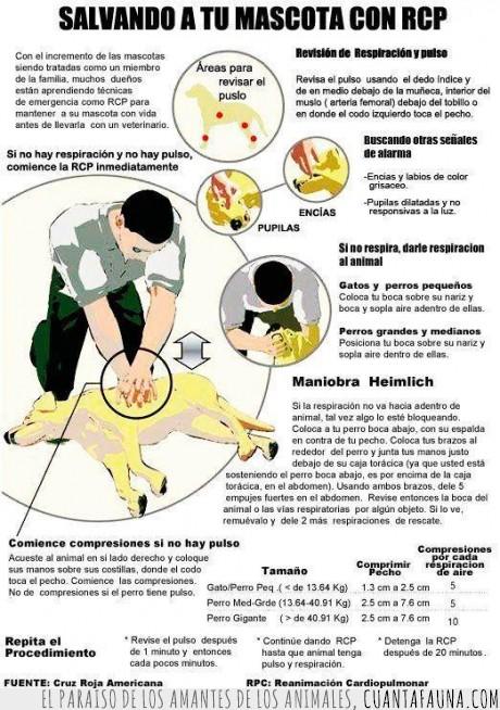 Amigos,Ayuda,Cruz Roja Americana,Gato,Información,Maniobra Heimilch,Mascotas,No olvides llevarlo al veterinario,Perro,Primeros Auxilios,RCP,Reanimación cardiopulmonar,Salvarlos