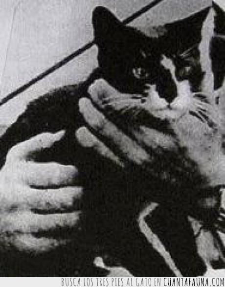 barco,gato,hundimiento,náufrago,Sam,Segunda Guerra Mundial,también conocido como Oscar