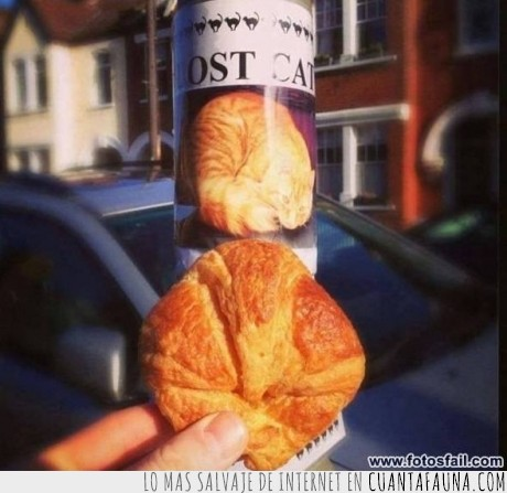 anuncio,coincidencia,comete un croissant,ese croissant,gato,pan,perdido,pokemon